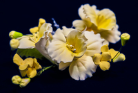 Цветочная ветка  Малая Нарцисс бело желтая