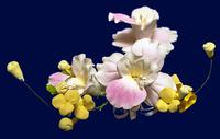 Цветочная ветка  Малая Нарцисс розовая