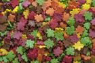 Посыпки Осенние листья,мини   , 100 гр